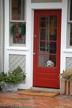 Dog Christmas Card Bearded Collie Waiting at by overthefenceart