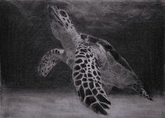 (SOLD) #47 Hawksbill Turtle