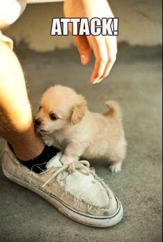 My Shoe! #pup #animal #pet