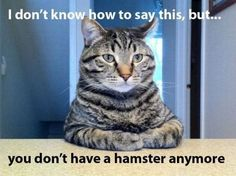 you don't have a hamster anymore funny sayings, awkward moments, funny pics, funny pictures, funny cats, funny quotes, hamster, true stories, cat memes