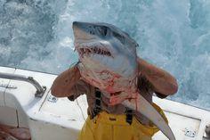 Destin Deep Sea Fishing Rodeo - Back Down 2 Fishing Charters in Destin, FL