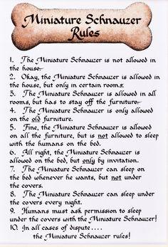 Awesome Mini Schnauzer Rules #schnauzer #funny #dogs