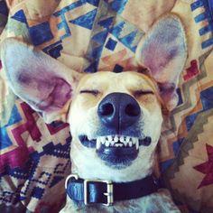 funni anim, dogs, maddi, funni dog, pet, funni pictur, puppi, coonhound, smile