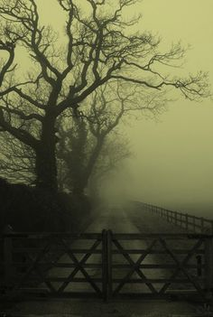 fog is so amazing and makes everything more mysterious #fog #mysteriesbeyond