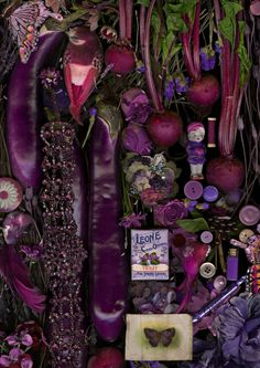 Claire Rosen - Still Life Study in Purple