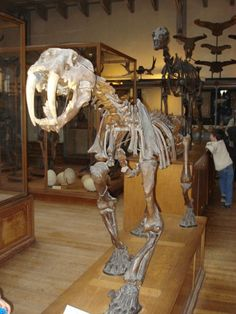 Gallery of Palaeontology and Comparative Anatomy - Paris.