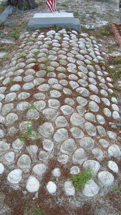 blanket of shells Ceder Key Florida