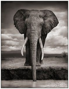 Elephant - by Nick Brandt