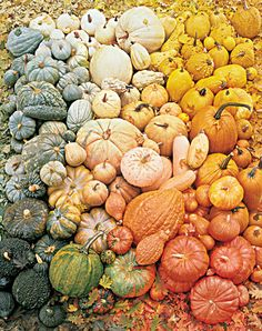 Gorgeous pumpkin color palette