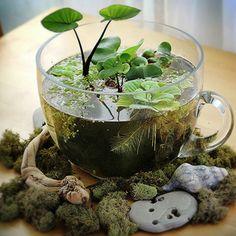 Plantas aquáticas na xícara.