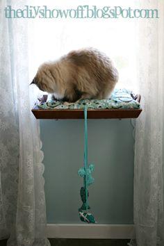 DIY Cat shelf!