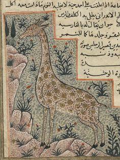 Bibliothèque de Bordeaux, ms. 1130, f. 147. Qazwînî, Adjâ'ib al-makhlûqât wa gharâ'ib al mawdjûdât (Marvels of Creatures and the Strange Thi... mediev illustr, mediev art, illumin text