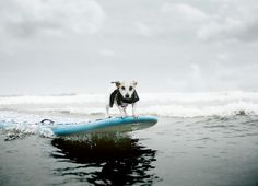 dog on surf