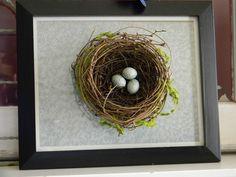 3d bird, a frame, bird nests