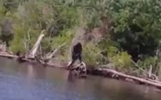 Virginia Bigfoot.