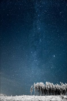 ♂ Composition Snow trees under the sky Milky Way and Finnish Forestphoto by Janne Heimonen