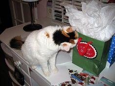Nosy Cat : )