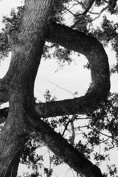 Alphabet Photography R | ... other alphabet art photos, so we'll touch on a few in this article