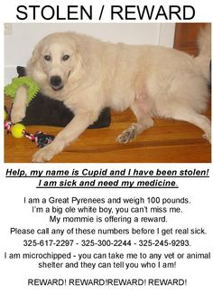 Lost Pets on Pinterest | Fenced Yard, Collars and White ...