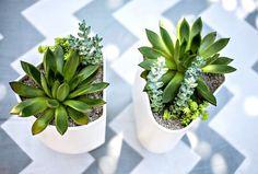 ASK THE EXPERT | Succulent Garden | I SPY DIY