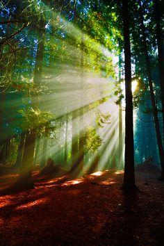 Misty morning by  Edward Marcinek on 500px.com