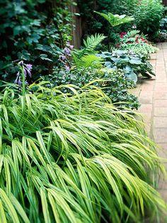 Ornamental grasses on pinterest ornamental grasses for Japanese mounding grass