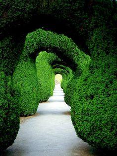 hedg, pathway, green garden, arch, gardens