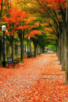 A natural red carpet in Princeton, New Jersey | #Fall #FallFoliage #Trees