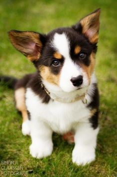 AWWW...what a cutie!