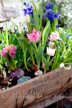 spring bulbs in a natural wood box