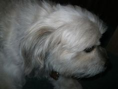 Teddy's Tidbits: Homemade Ear Cleaner for Dogs [INFO HUB]