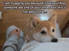 funny animals, funny dogs, shiba inu, animal funnies, funny animal pictures, funny dog pics, pet, baby dogs, shoe