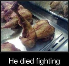 bird, laugh, funny pictures, ninja, die fight