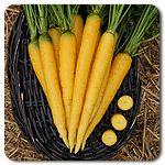 Organic Yellowstone Carrot