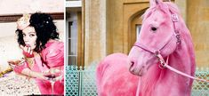 rose, little girls, real life, horses, dream, colors, ponies, wizard of oz, pink hors