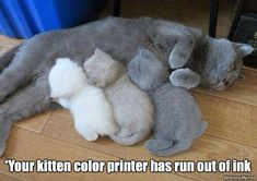 Your kitten color printer has run out of ink...