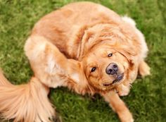 Ringworms, Parvo, Ear Mites in Dogs - Dog Health Problems & Issues   I Love My Dog So Much