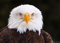 Property Manager Eagle