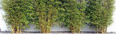 Spun Bamboo Women's Bamboo and Organic Cotton Clothing