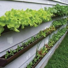 Veggie garden out of gutters