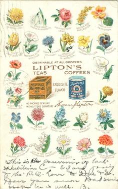 Vintage Tea Postcard