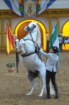 The Royal Andalusian School of Equestrian Art