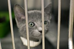 Adopt a Pet, Kitten, Shelter, Humane Society, SBK Animal Center, Blountville TN Photo © M.J. Photography. All Rights Reserved. http://www.mjphotographyTN.com/  #mjphotographyTN #petphotography