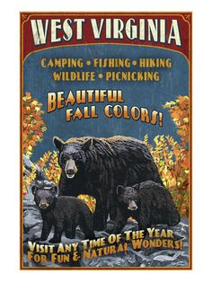 west virginia bears. i want this poster.