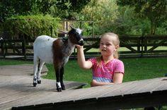 Kinderboerderij in Middelburg