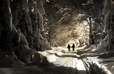 through the snow... artists, photographyelena shumilova, elena photographi, photographerelena shumilova, shumilova photographi, snow, amaz photographi, the artist, children photography