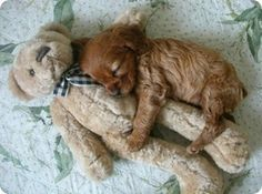 Teddy and pup