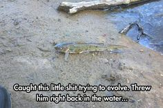 The creationist approach to evolution...?