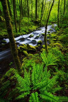 INSIDE FOREST- Stunning Pics (10), Columbia River Gorge, Oregon.