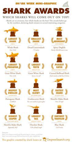 Shark Awards #sharkweek #shark